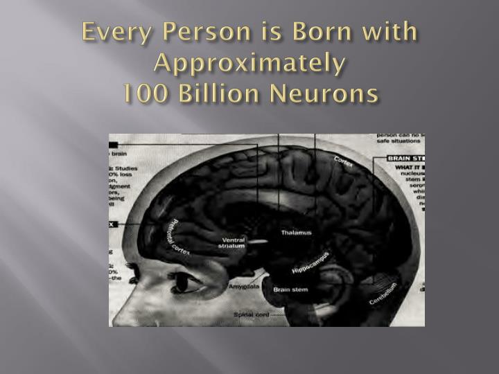 Every Person is Born with Approximately