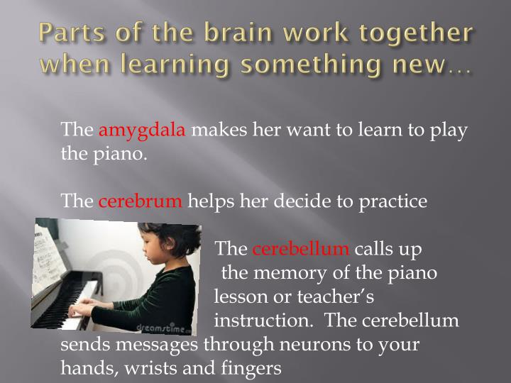 Parts of the brain work together when learning something new…