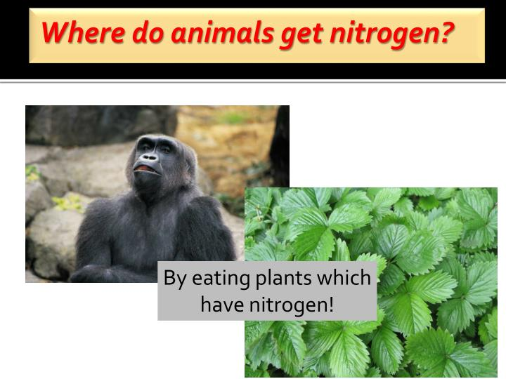 Where do animals get nitrogen?