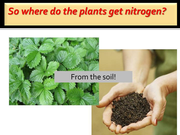So where do the plants get nitrogen?