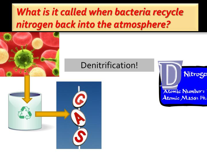 What is it called when bacteria recycle nitrogen back into the atmosphere?