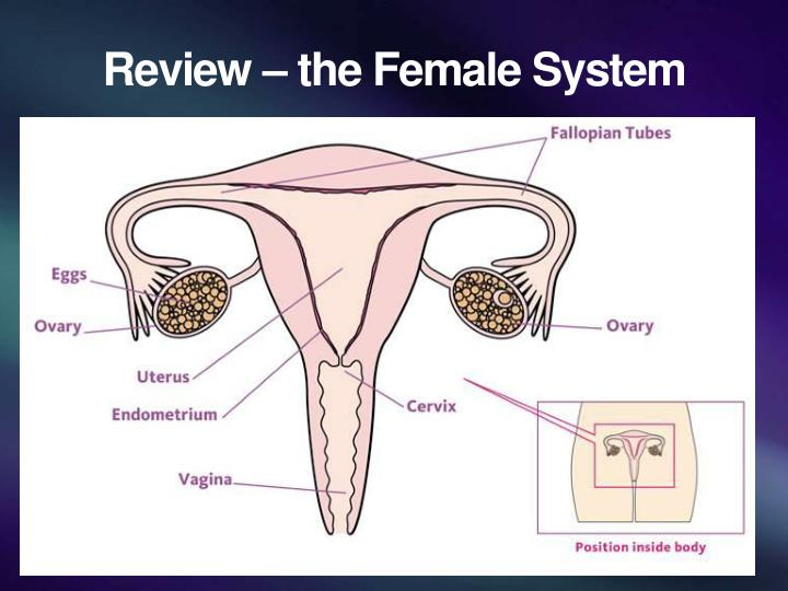 Review – the Female System