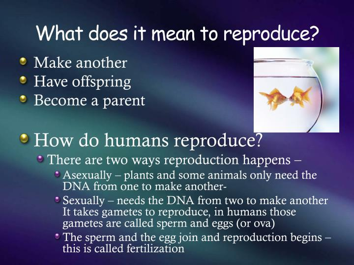 What does it mean to reproduce?