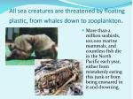 all sea creatures are threatened by floating plastic from whales down to zooplankton