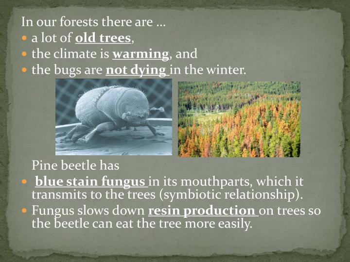 In our forests there are …