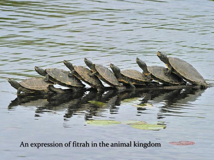 An expression of fitrah in the animal kingdom