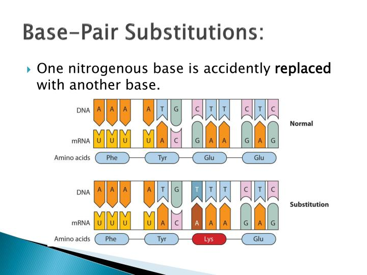 Base-Pair Substitutions: