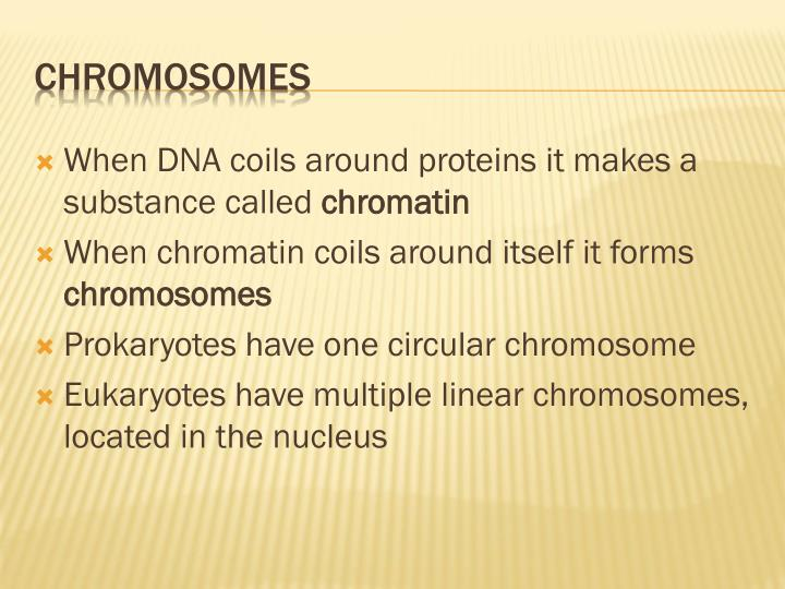 When DNA coils around proteins it makes a substance called