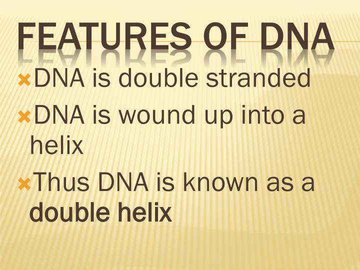 DNA is double stranded