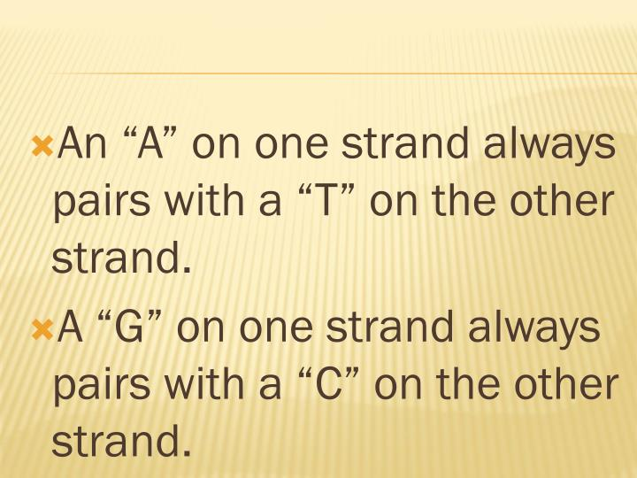 """An """"A"""" on one strand always pairs with a """"T"""" on the other strand."""