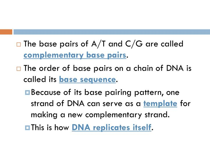 The base pairs of A/T and C/G are called