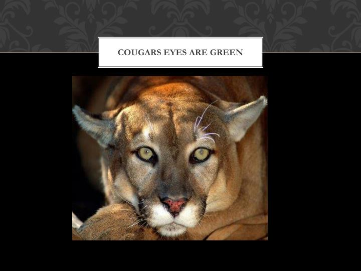 Cougars eyes are green