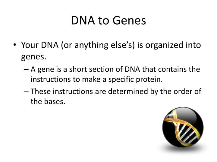 DNA to Genes