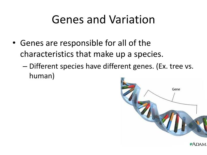 Genes and Variation