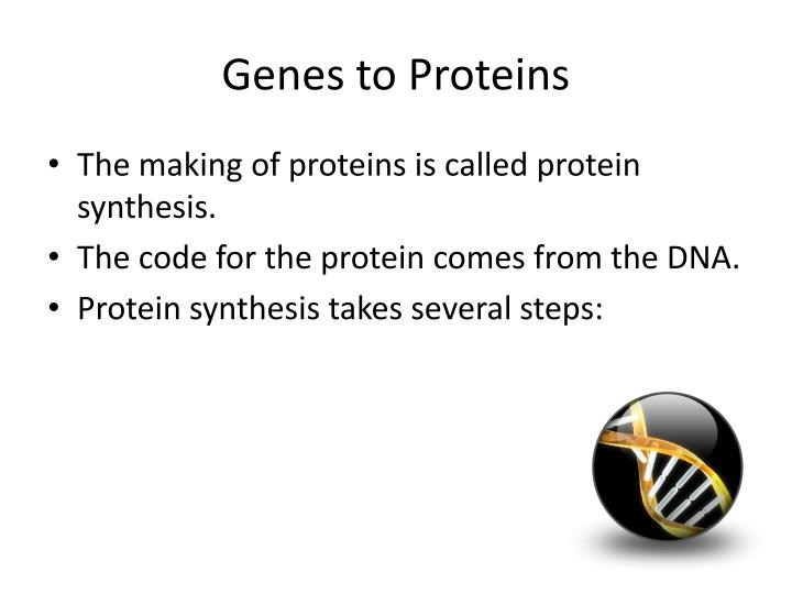 Genes to Proteins