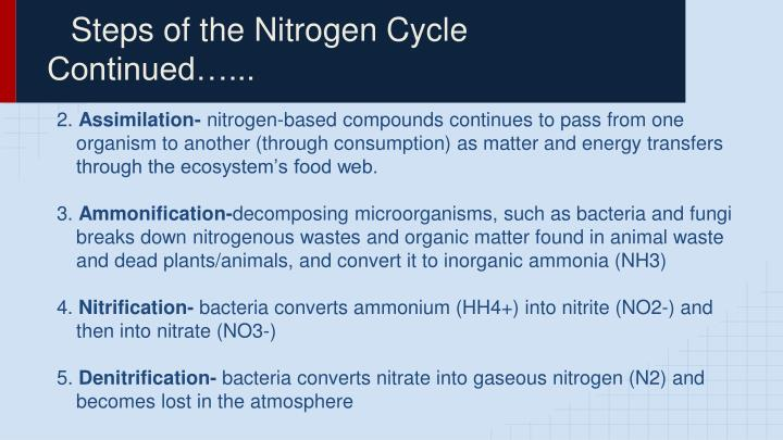 Steps of the Nitrogen Cycle Continued…...