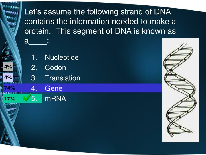 Let's assume the following strand of DNA contains the information needed to make a protein.  This segment of DNA is known as a____: