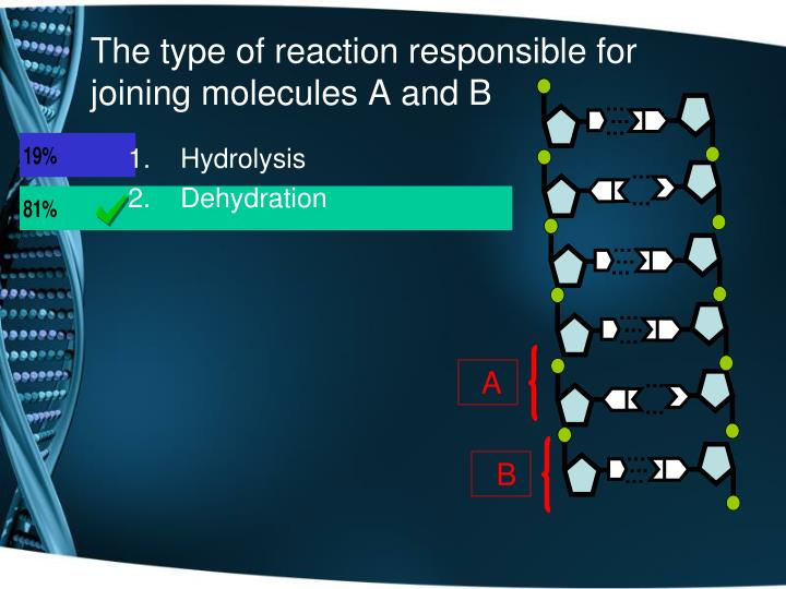 The type of reaction responsible for joining molecules A and B