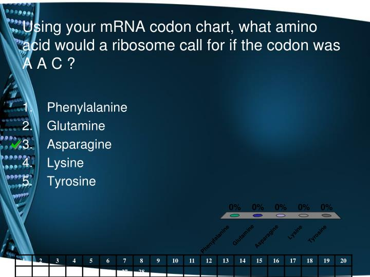 Using your mRNA codon chart, what amino acid would a ribosome call for if the codon was A A C ?