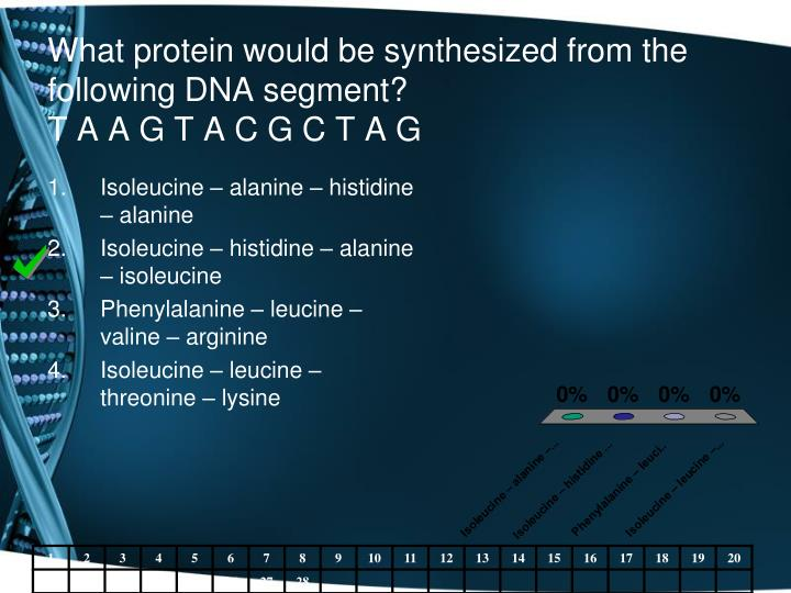 What protein would be synthesized from the following DNA segment?