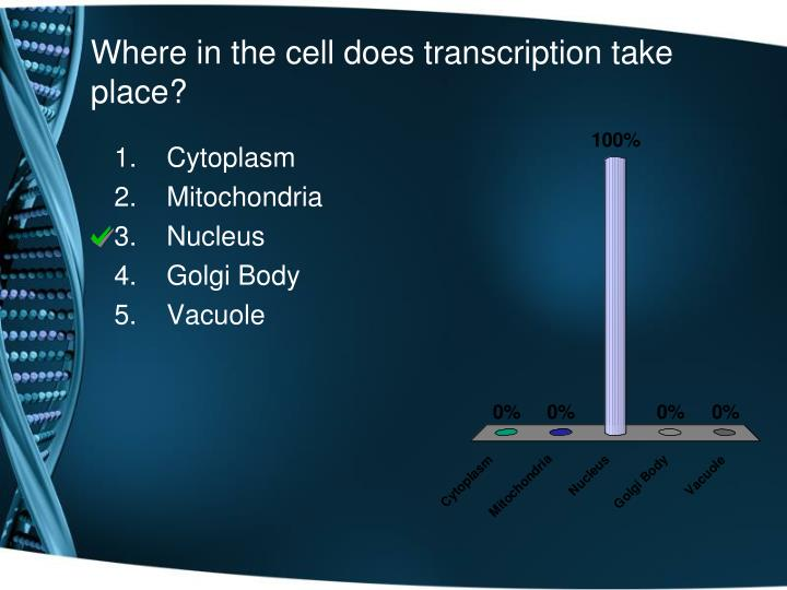 Where in the cell does transcription take place?