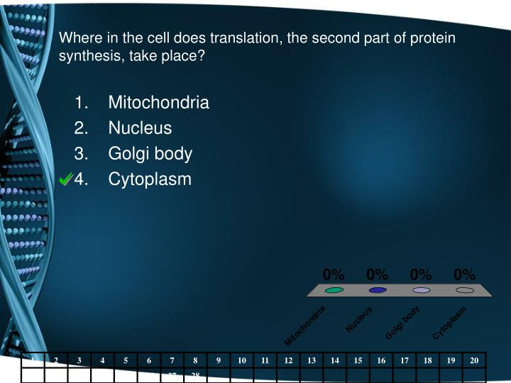 Where in the cell does translation, the second part of protein synthesis, take place?