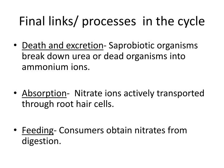 Final links/ processes  in the cycle