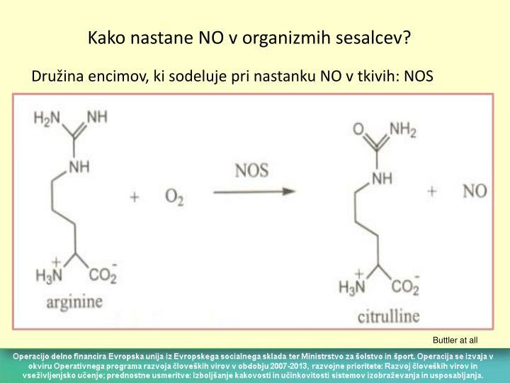 Kako nastane NO v organizmih sesalcev?