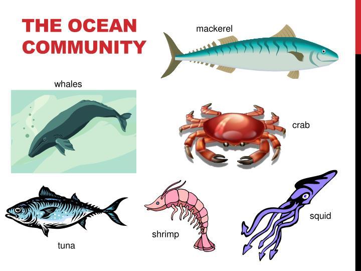The OCEAN Community