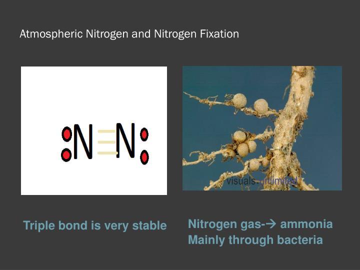 Atmospheric Nitrogen and Nitrogen Fixation