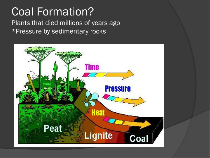 Coal Formation?