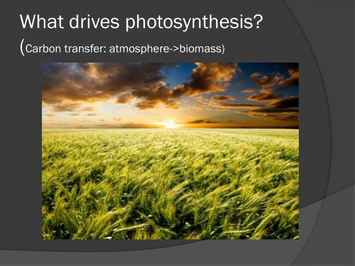 What drives photosynthesis?