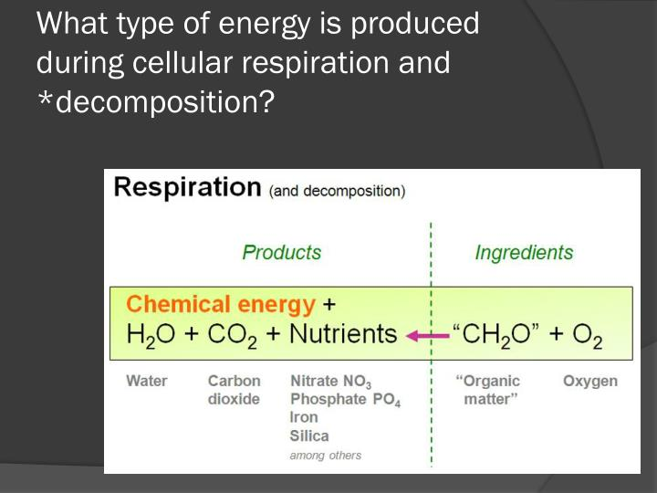 What type of energy is produced during cellular respiration and *decomposition?