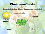 photosynthesis1