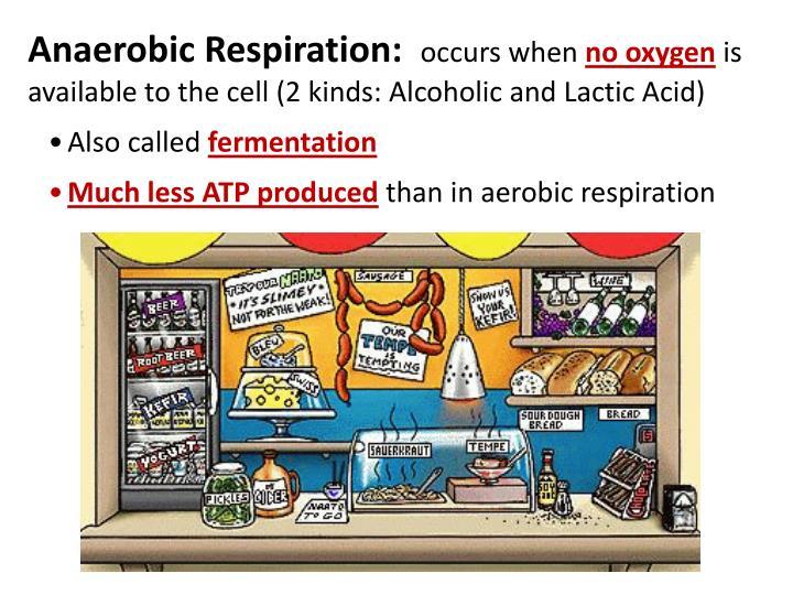Anaerobic Respiration: