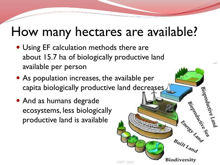 How many hectares are available?