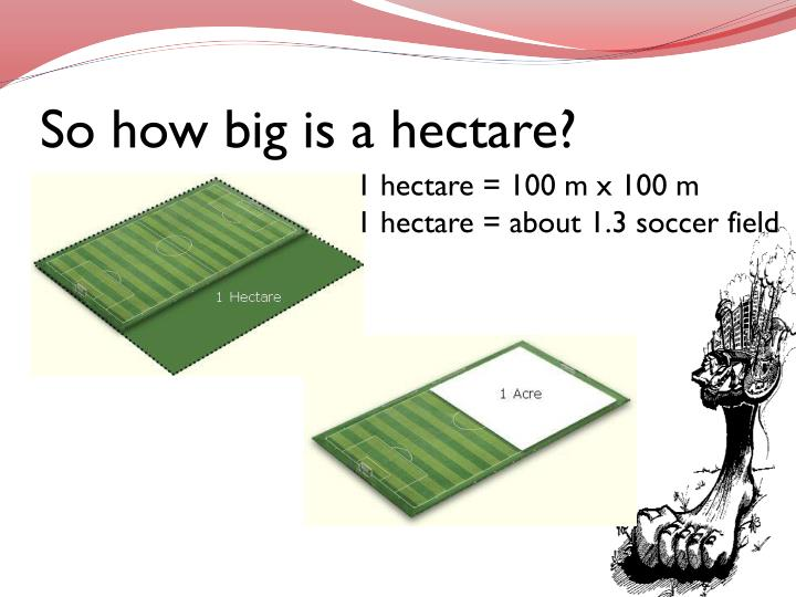 So how big is a hectare?