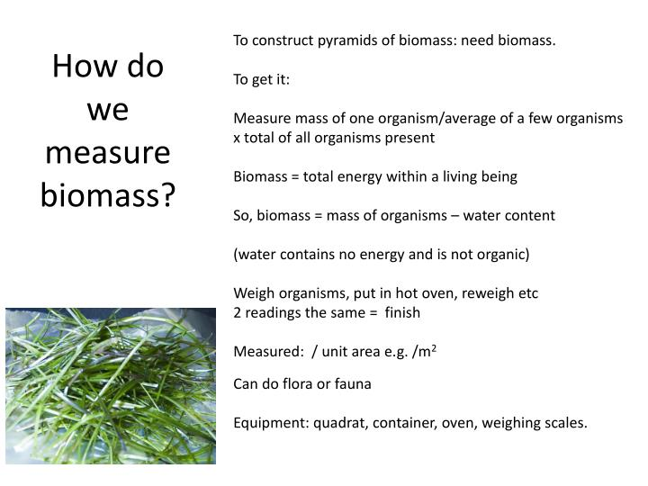 How do we measure biomass?