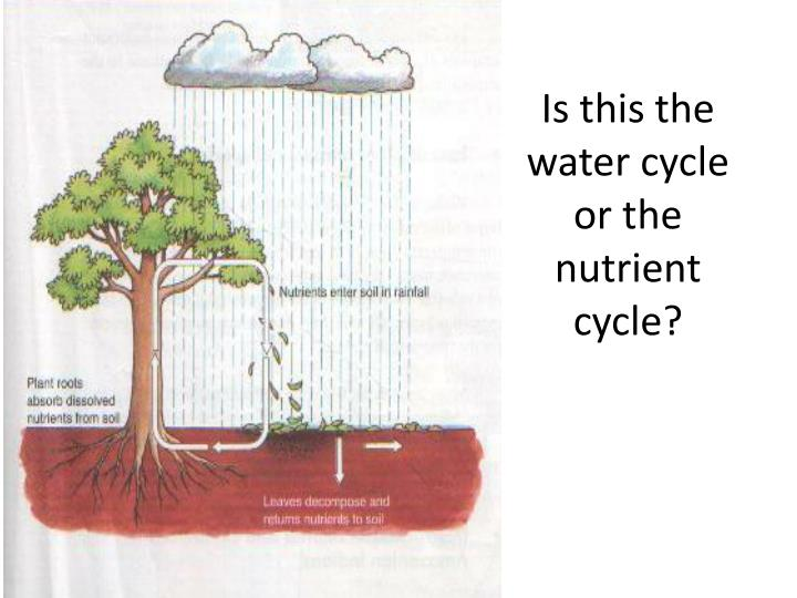 Is this the water cycle or the nutrient cycle?