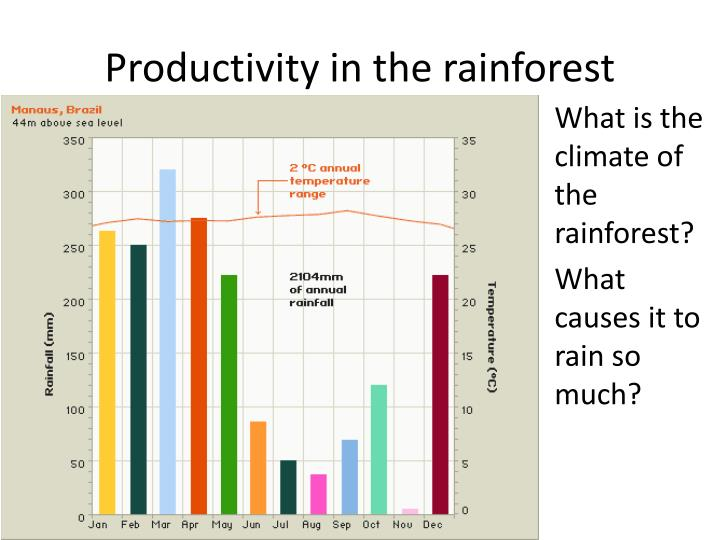 Productivity in the rainforest