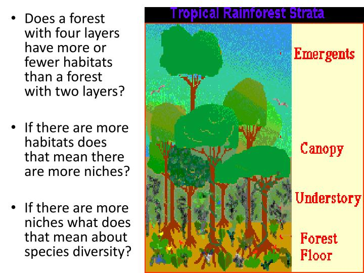Does a forest with four layers have more or fewer habitats than a forest with two layers?