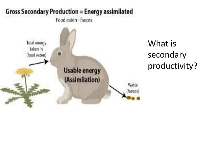 What is secondary productivity?