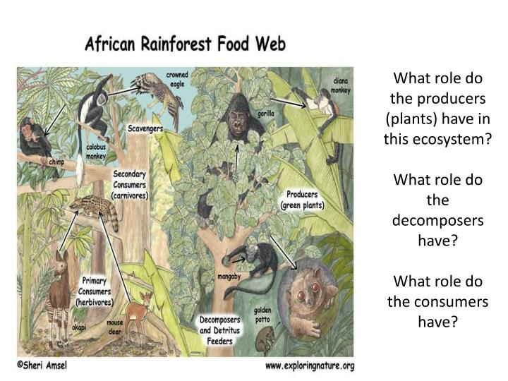 What role do the producers (plants) have in this ecosystem?