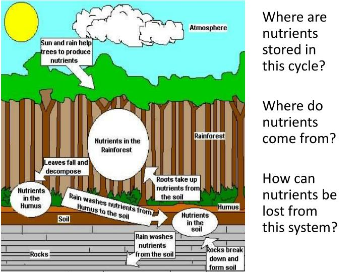 Where are nutrients stored in this cycle?