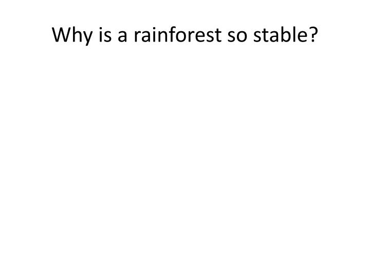 Why is a rainforest so stable?