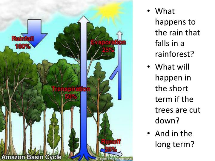 What happens to the rain that falls in a rainforest?