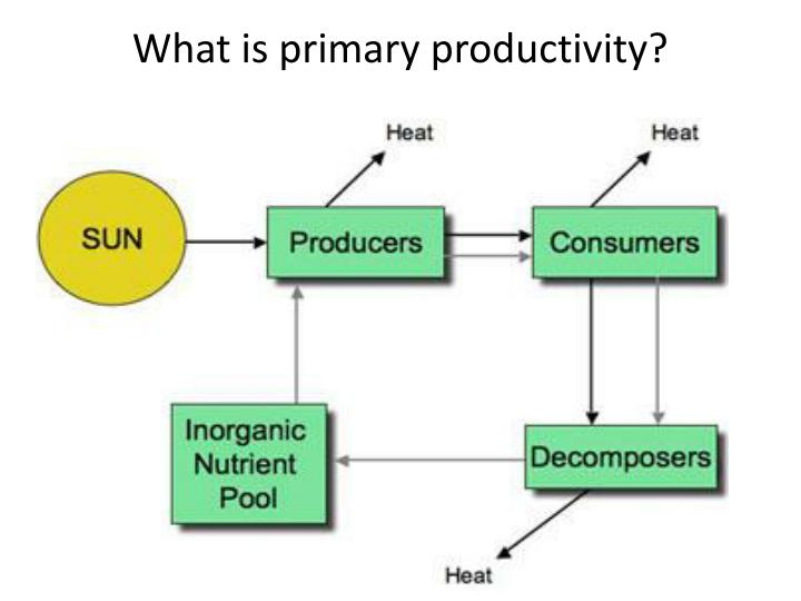 What is primary productivity?