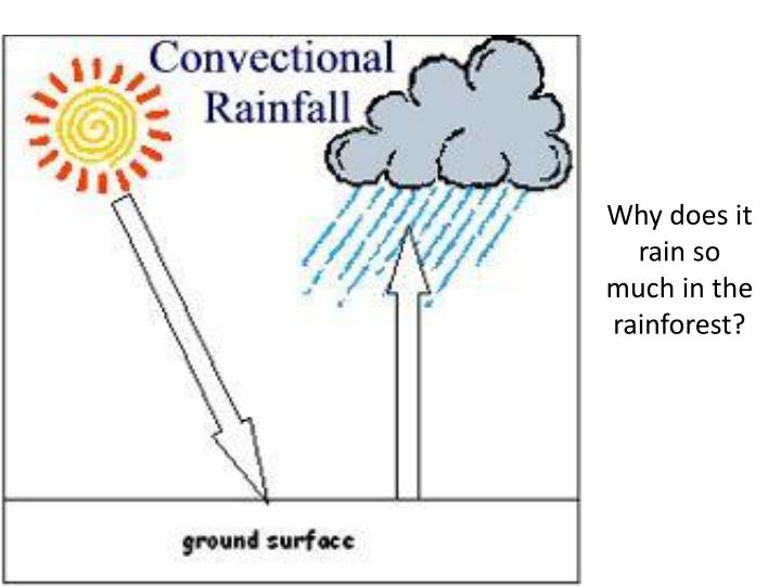 Why does it rain so much in the rainforest?