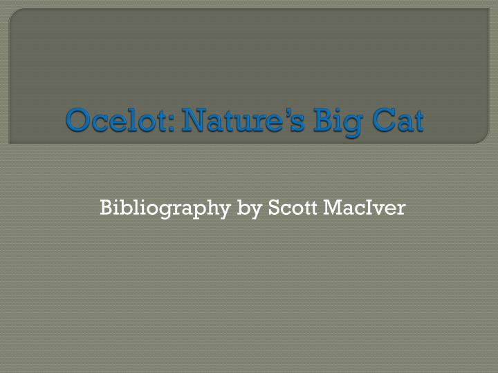 Ocelot nature s big cat