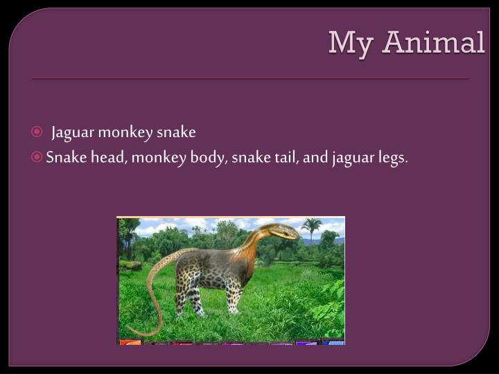My Animal